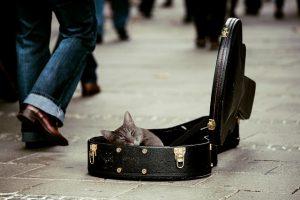 Kitty via pixabay